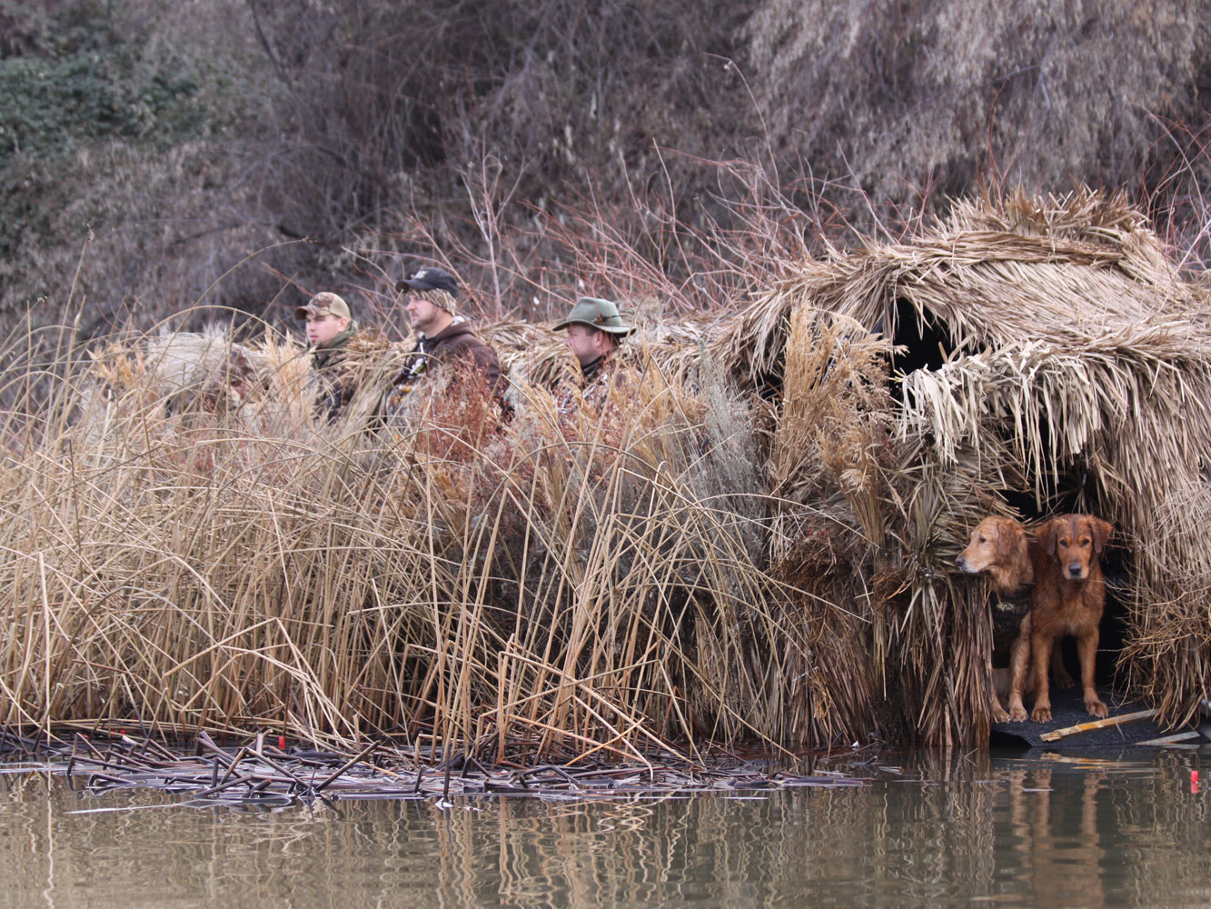Boat-Blind-Hunting-Dogs