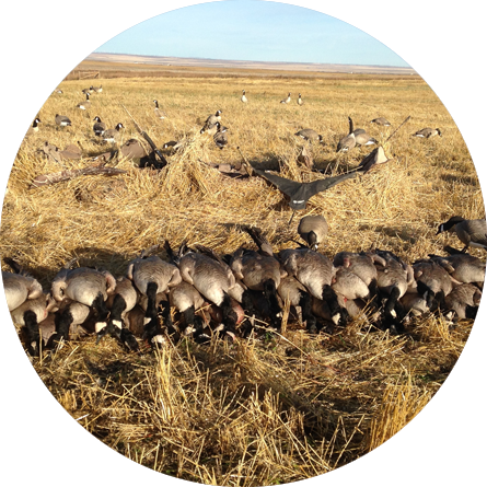 Alberta Waterfowl Hunting Limits